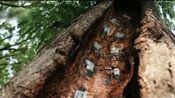 济南大明湖畔树洞惊现手绘武功秘籍, 网友吐槽大明湖不只有夏雨荷
