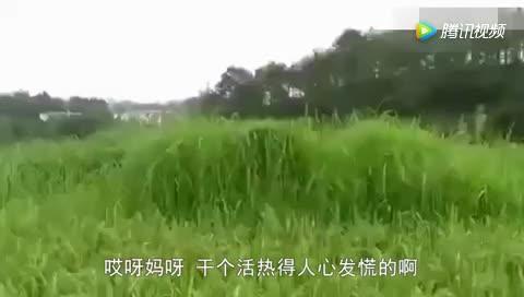 川话版偷吃被抓
