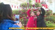春节游客接待前60名城市出炉,河北这4市榜上有名!