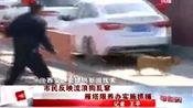32岁女子狂犬病发作身亡 西安全城打狗