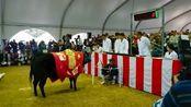 1头牛168万人民币!日本拍出天价松阪牛