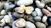 辉狼又去捡奇石,每次都有新的发现,这次也不例外