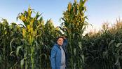 新疆胖哥,带你看北疆农村,玉米比人高,瓜多还很甜,有没有吃过?
