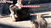 小阿的休闲:新疆美女带大家逛北京动物园,你最喜欢的动物是什么