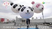 中国旅日大熊猫产崽 日本民众街头拉横幅张灯结彩庆贺_网罗天下