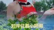 209年苍梧县东安荔园迟熟荔枝电商节将于2019年7月16日开幕 宣传花絮