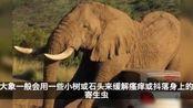 视频:大象用Polo小汽车挠痒