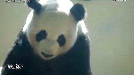 现实版功夫熊猫2 秀街舞BREAK