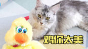 缅因猫对下蛋的公鸡玩具毫无兴趣,喷上猫薄荷后疯狂啃食!