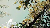 【钢琴】sekaiichi hatsukoi --静谧serene