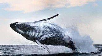 骄阳3D全息分享|鲸鱼跃水而出,直扑群众!