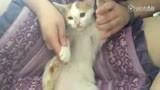 大耳朵猫猫的可爱颂 www.zeishe.com