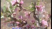 中华民谣:在那桃花盛开的地方