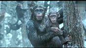 《猩球崛起3:终极之战》电视预告 历史必将被铭记