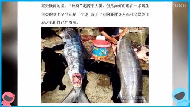 """菲律宾渔民捕获""""纹身鱼"""""""