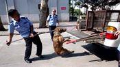 32岁女子感染狂犬病发病身亡 西安全城打狗