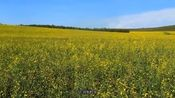 呼伦贝尔大草原真是风景美如画