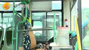 台商区:新建41座公交站亭 8月投入使用