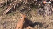 动物之间最暖心的十大镜头,不惜生命帮助对方,太有爱了!