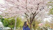 【六西】日本生活记录vol.8/又去吃烤肉啦/樱花真的好漂亮