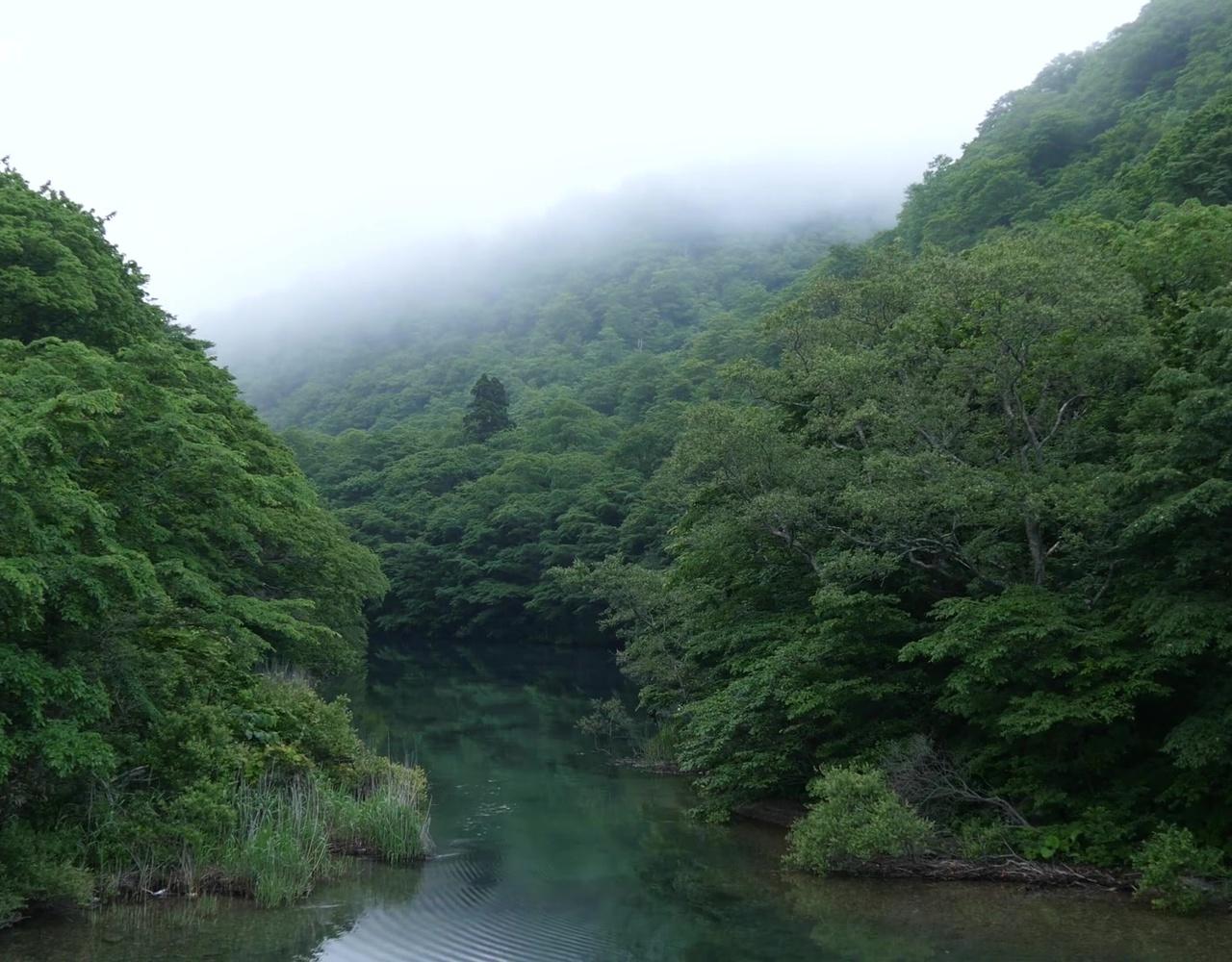 【最美日本】JAPAN 奥入瀬渓流の新緑 Fresh Green.The Oirase Stream in nature