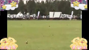 老鹰攻击狗和人类,最后被踩住翅膀
