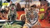6张文宏医生科普传染病知识(选看)