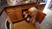 惊人!英女子将身体塞进61厘米高罐子-娱乐百分百-蓝天传媒