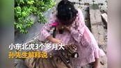 9岁女孩公园遛老虎 其父:老虎还小没有攻击性