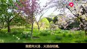 佛教音乐:《我若向刀山》观音菩萨救苦救难,观音护佑所求随心!