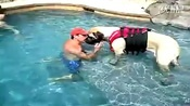 [拍客]搞笑动物 超大狗狗与主人泳池游泳2014超实用的训狗视频教程教材,7天学会训狗