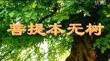 菩提本无树