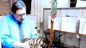 中国分布很广的狸花猫,英文名独特,在国外很受喜爱!