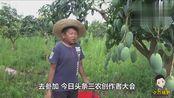 受邀参加三农创作者大会,小六亲自摘果迎接远方的朋友