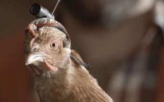 """摄像防抖神器创意广告《稳定""""鸡""""》"""