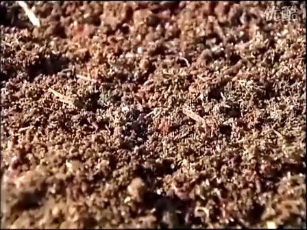 蚯蚓养殖技术3