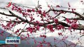 南昌艾溪湖瑶湖公园 恢复开放