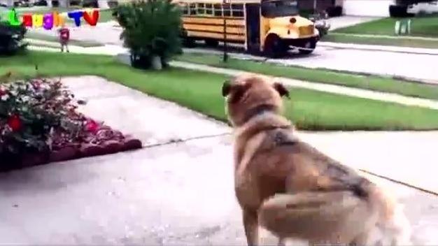 狗狗每天在门口等小宝宝回来,想起《一条狗的使命》