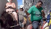 希腊禁止肥胖游客骑驴观光: 体重不得超过100公斤