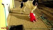 大狗狗和宝宝之间欢乐的爱,把人能萌死