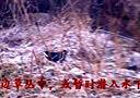 黑水鸡二【音乐版】2013年12月8日录于南阳麒麟山庄 4分58秒