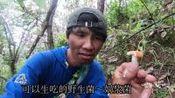 可以生吃的野生菌你见过吗, 云南农村的小伙带你看看哪些菌可以吃