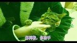 七分黑——最无节操的中国狸花猫