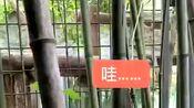 上海动物园赤狐的叫声