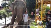 中了偷猎者毒箭的大象,本已无望等待死亡,不料神奇的一刻出现啦