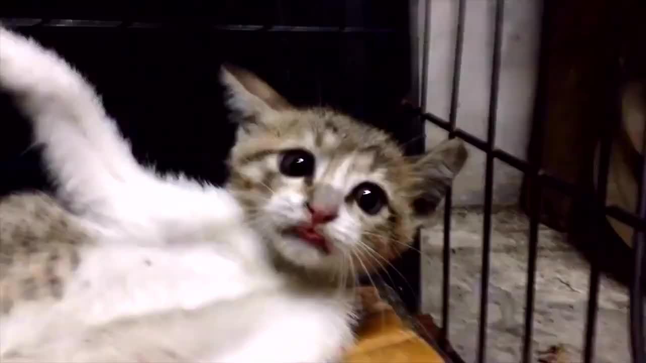 其实劳资是一只豹子 别看我现在是小猫