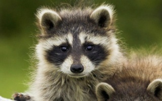 小浣熊的top 10 超搞笑超可爱