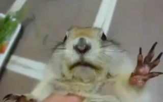 10个有趣的松鼠