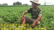 河南登封2亩地2万多斤西瓜一夜之间被砍烂64岁瓜农坐地痛哭