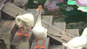 上海豫园一些可爱的小动物